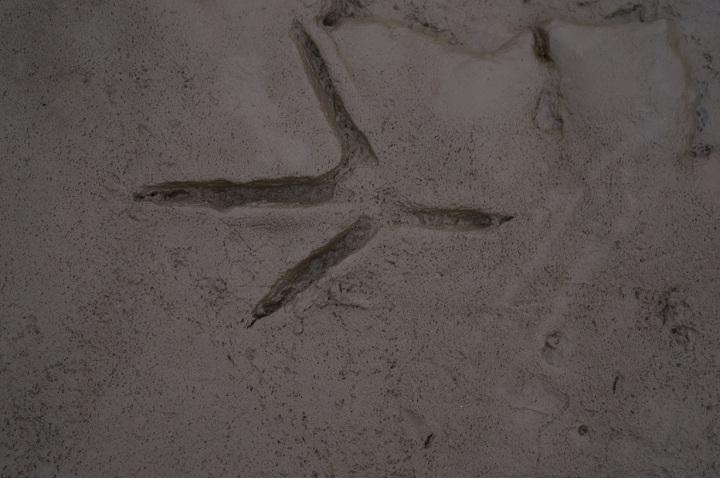 Heron Tracks, Flintshire, UK