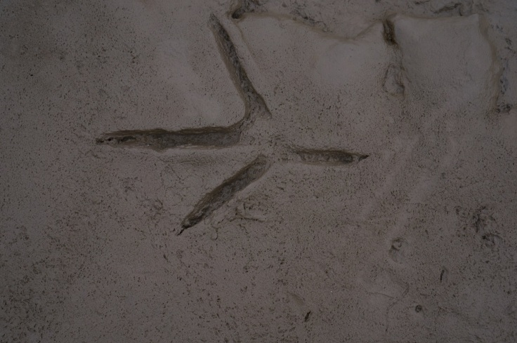 Heron Tracks, Flintshire, UK