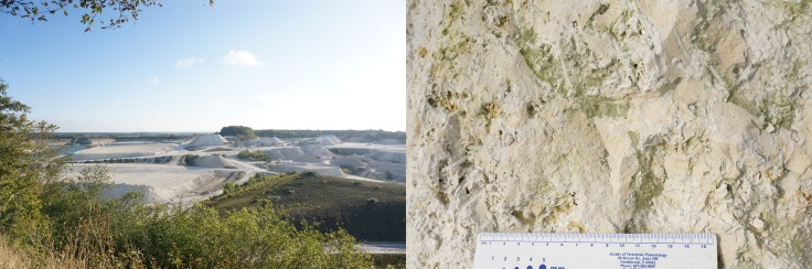 The Quarry, and a close up of the fossil rich limestone